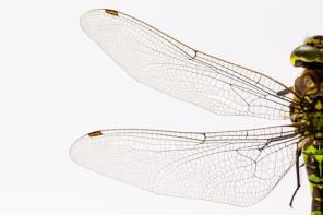 Wings 1
